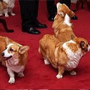 The Queens Corgis