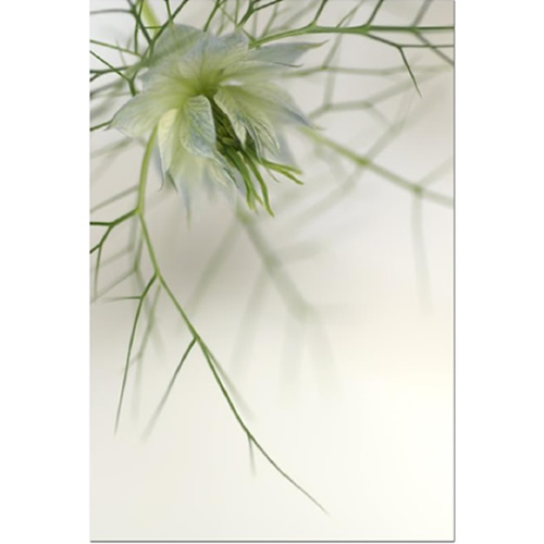 Love in the Mist Dreamcatcher III Fine Art Print by Celia Henderson LRPS