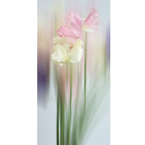 Celia Henderson Sweet Pea Dancing Queens Stretched Canvas