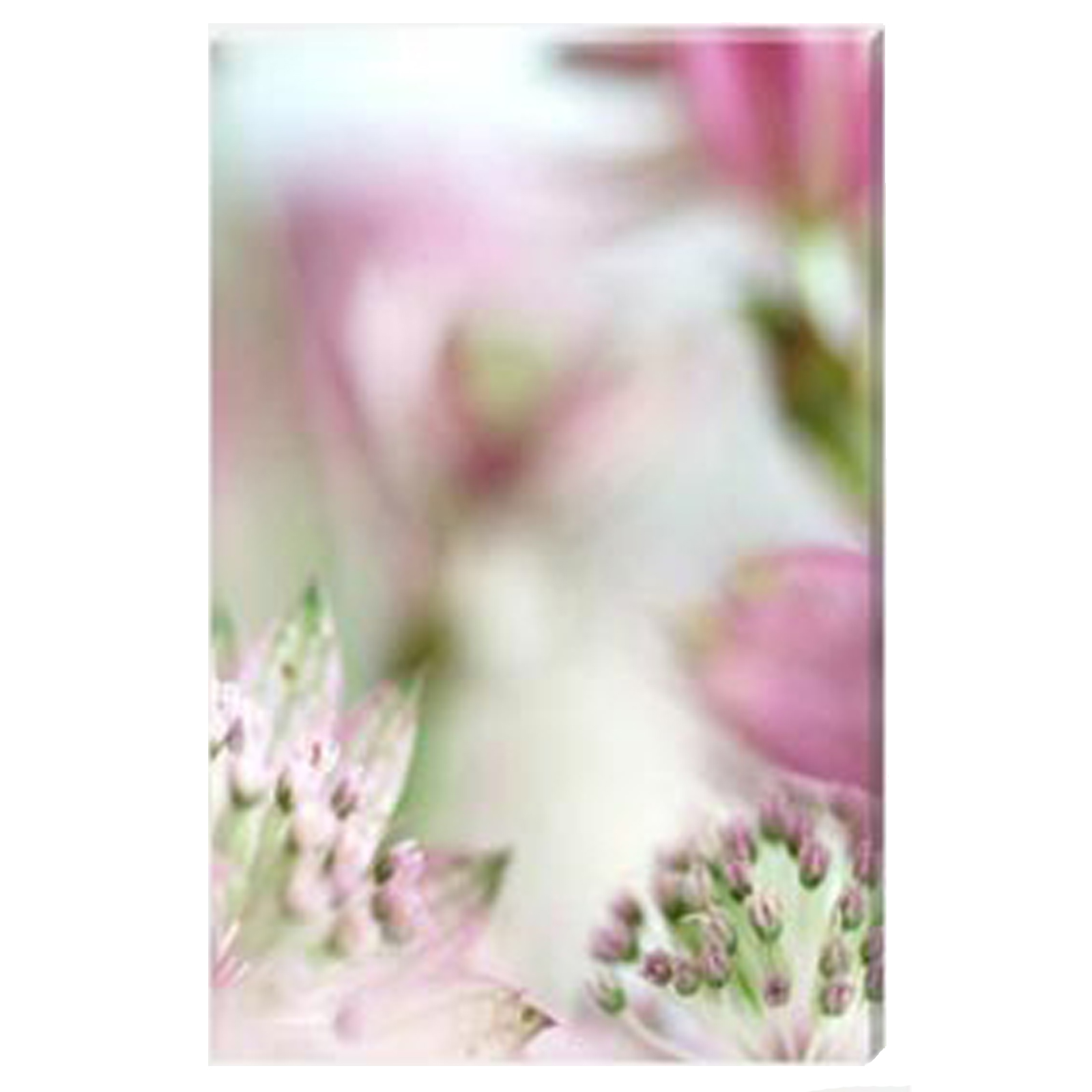 Astrantia III - Stretched Canvas by Celia Henderson LRPS