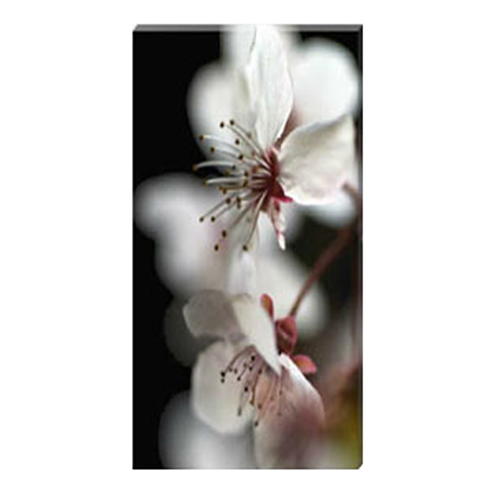 Cherry Blossom Time Stretched Canvas by Celia Henderson LRPS