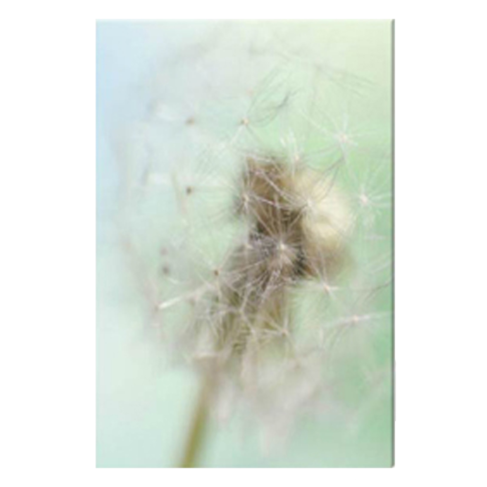 Dandelion Seed Head Stretched Canvas by Celia Henderson LRPS