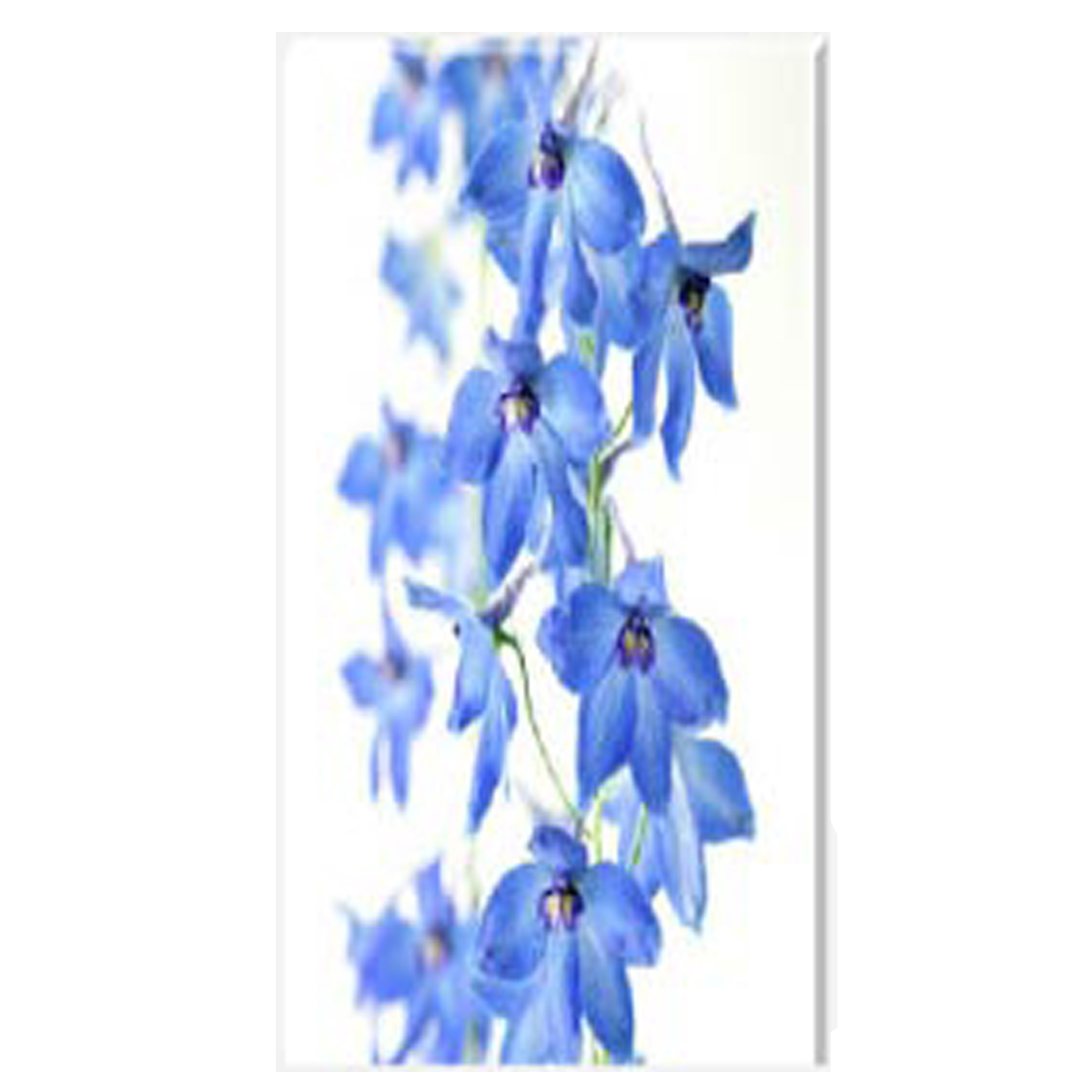 Delphinium I Stretched Canvas by Celia Henderson LPRS