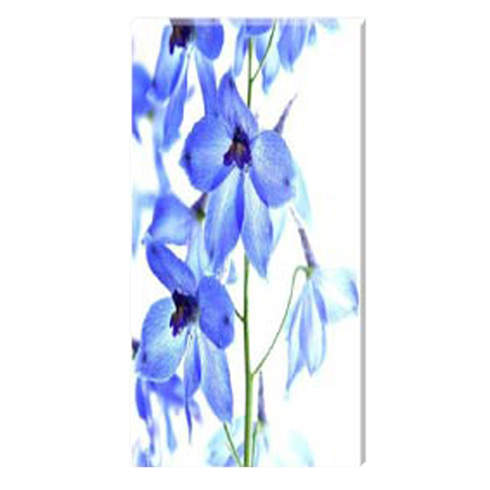 Delphinium II Stretched Canvas by Celia Henderson LRPS