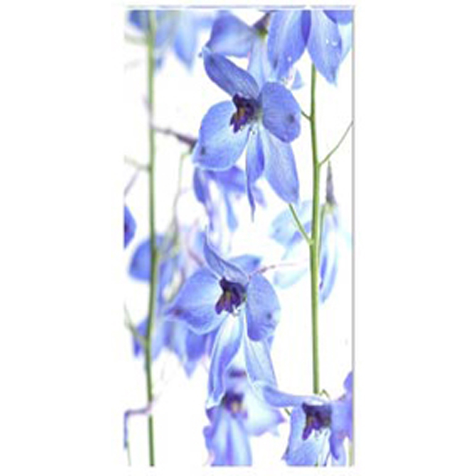 Delphinium III Stretched Canvas by Celia Henderson LRPS