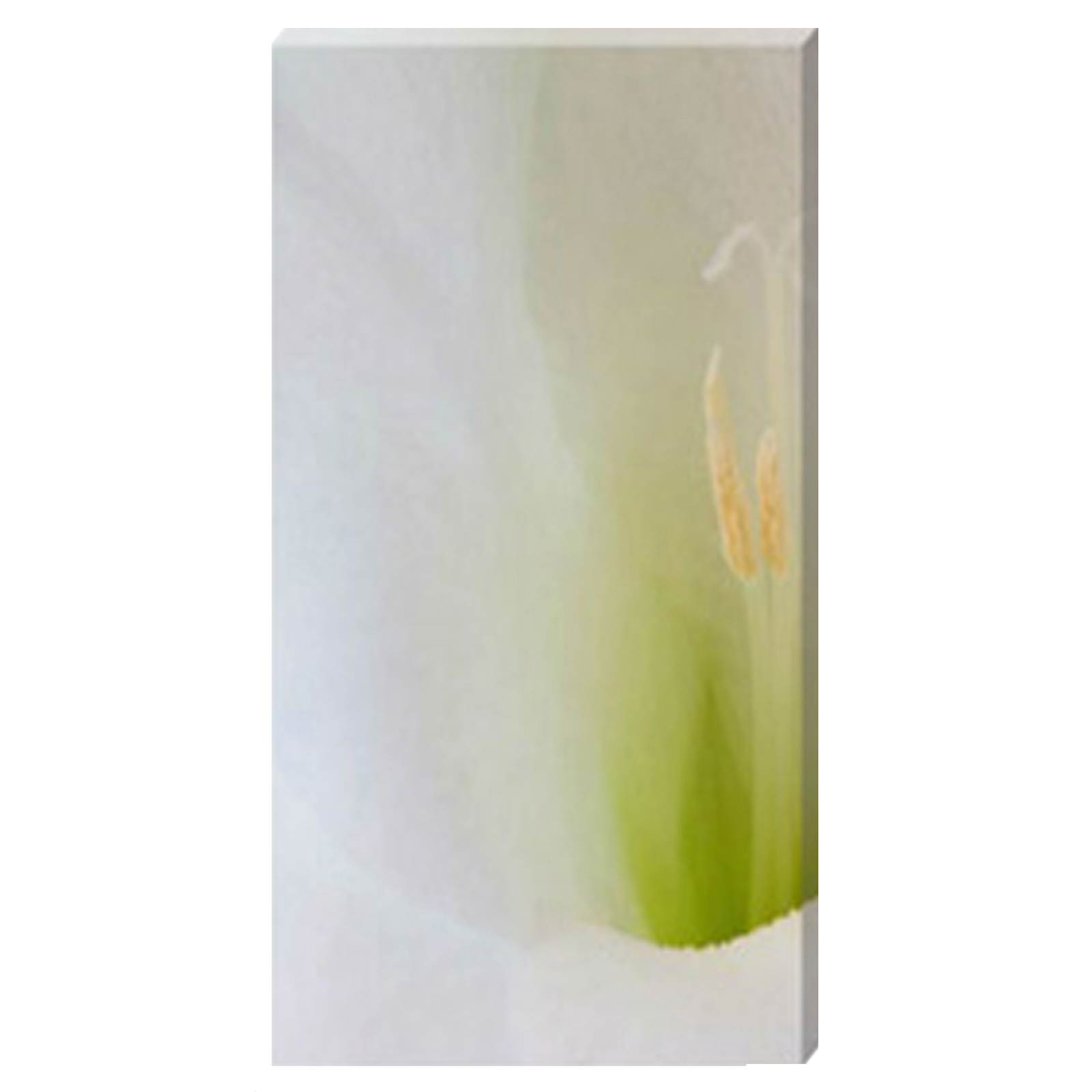 Gladioli Flute Stretched Canvas by Celia Henderson LRPS
