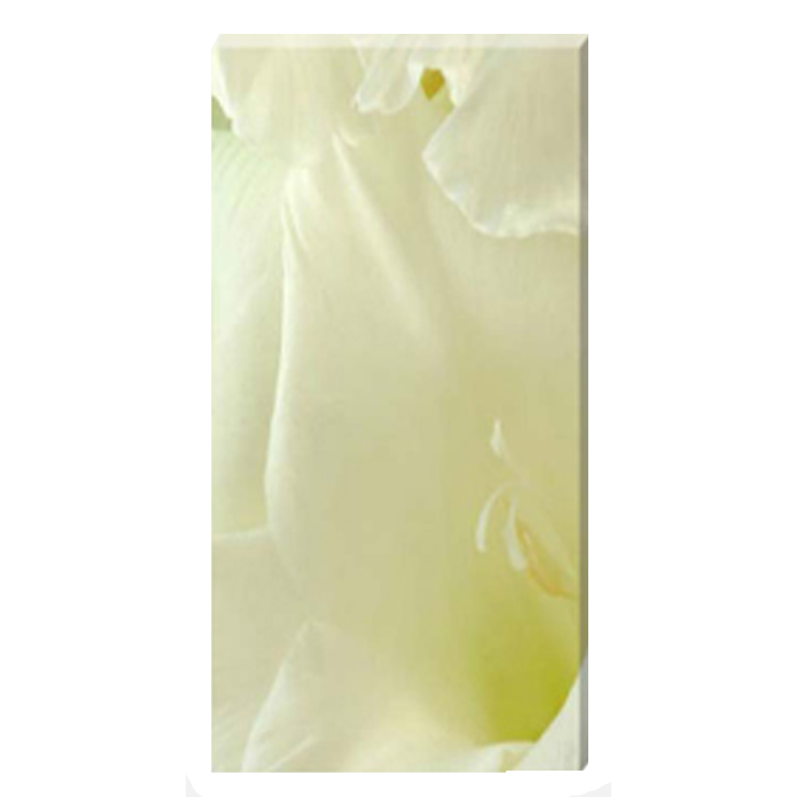 Gladioli White Linen Stretched Canvas by Celia Henderson LRPS