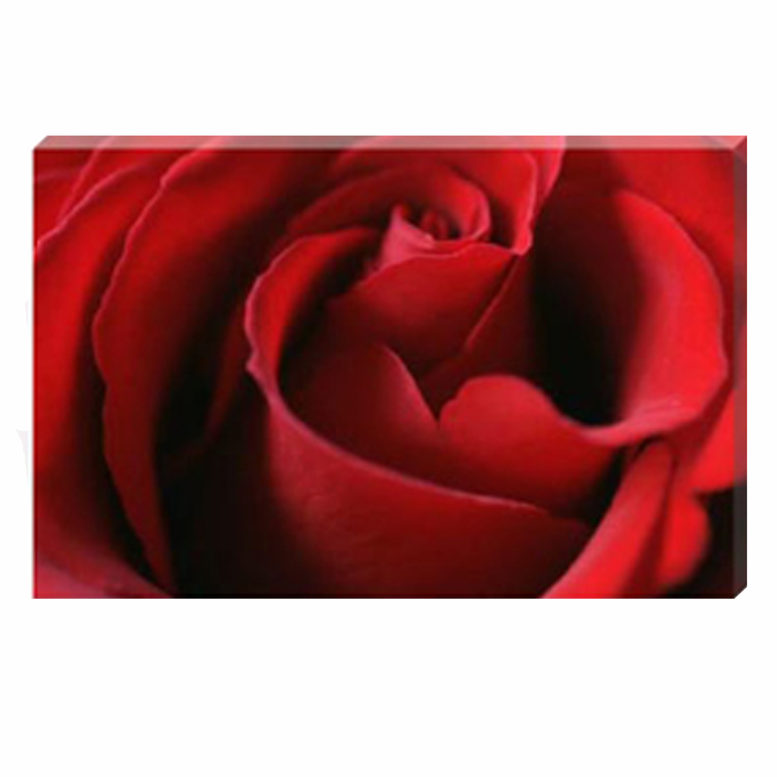 Celia Henderson Valentine Rose Stretched Canvas