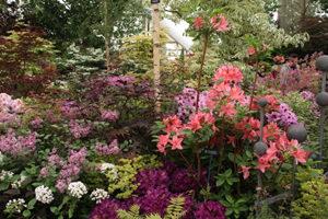 RHS Chelsea Flower Show Designer Garden in Lilac and Pink