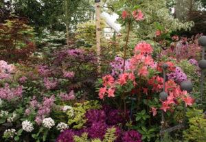 RHS Chelsea Flower Show Designer Garden Purples and Peach Colours