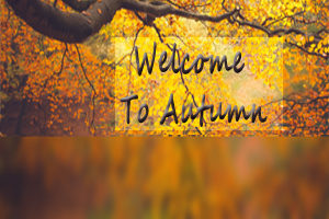 Autumn Colours for Website Home Page