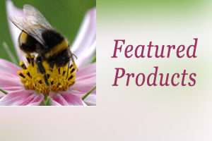 Bumble bee with head in flower centre with featured product text